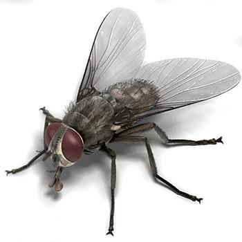 Nằm mơ thấy con ruồi-1