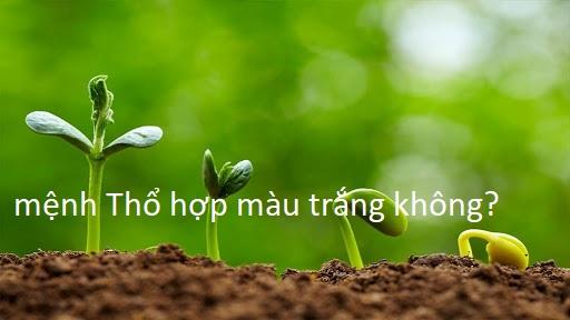 menh-tho-co-hop-voi-mau-trang-khong